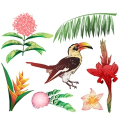 Plants and toucan vector