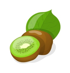 Isolated kiwi fruits vector