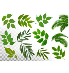Big collection of braches with leaves on vector