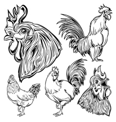 Cock hand drawn set vector