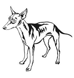 decorative standing portrait of dog cirneco dell vector image