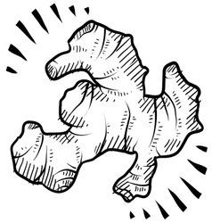 Doodle ginger vector