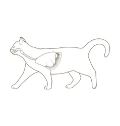 Respiratory system of the cat vector