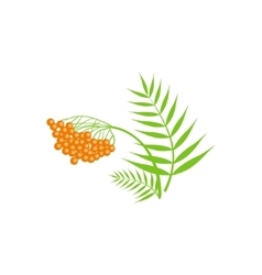 Ash berry and leaf as autumn attribute vector
