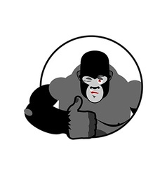 Gorilla thumbs up showing well sign all right vector