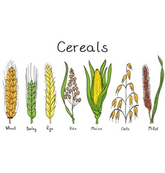 Cereals hand-drawn vector