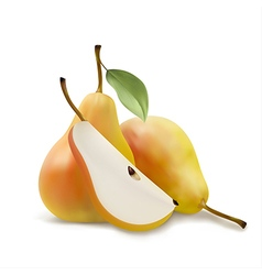 Realistic of pears a piece pears vector
