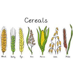 Cereals hand-drawn vector image vector image