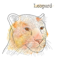 Hand drawn pencil watercolor of leopard with label vector