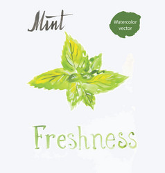 mint leaves watercolor vector image