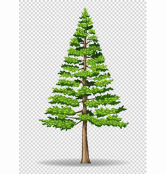 Pine tree on transparent background vector