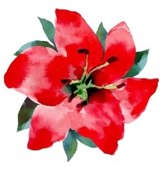 Watercolor of ared flower on a white vector