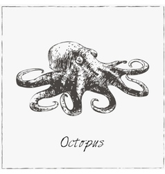 Octopus hand drawn sketch collection of seafood vector