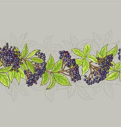 Elderberry seamless pattern vector
