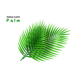 Isolated realistic palm vector