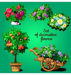 Home set of decorative flowering plants vector
