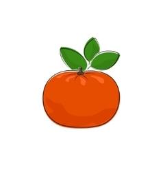 Citrus mandarin isolated on white vector