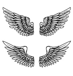 vintage wings isolated on white background design vector image