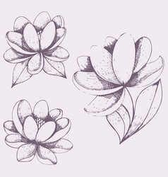 set of floral hand drawing vector image vector image