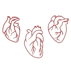 Human hearts icons in outline style vector