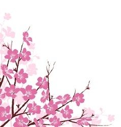 Branches with pink flowers isolated on white vector