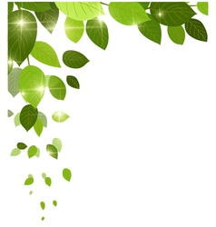 beauty white background with leaves for you design vector image
