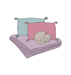 Beautiful pillows and cat on a white background vector
