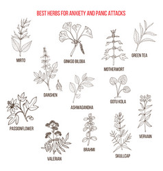 Best natural herbs for anxiety and panic attacks vector