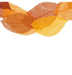 Dry autumn leaves template EPS 10 vector image vector image
