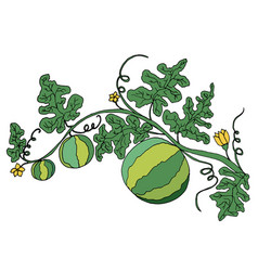 Juicy ripe watermelon in foliage and flowers is vector