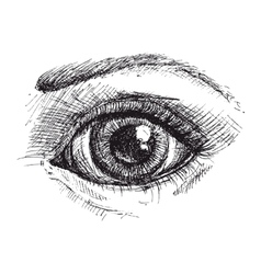 Black and white drawing of eye vector