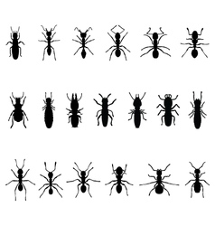 ants and termites vector image