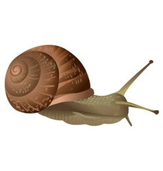 Garden snail isolated vector