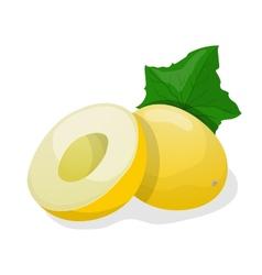 Ripe melon vector image