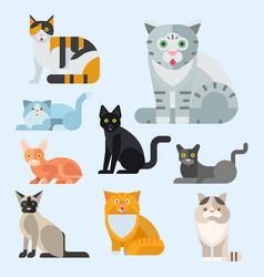cats cute animal funny vector image vector image