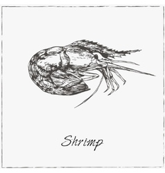 Shrimp hand drawn sketch collection of seafood vector