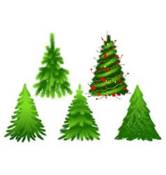 set green christmas fir pine tree vector image vector image