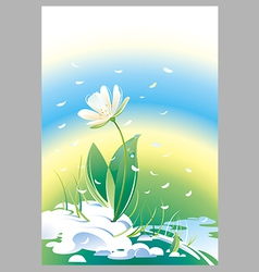 Flower snowdrop vector
