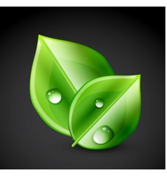 Green leaf ecology concept vector image vector image