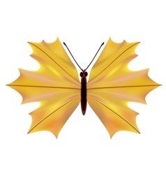 A butterfly with a maple leaf vector image
