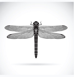 Dragonfly on white background insect animal vector