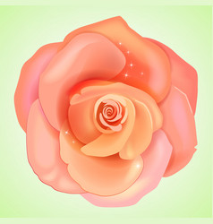Peach pink rose vector
