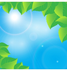 green leaves on a sunny sky background vector image