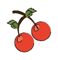 Drawing sweet cherry fruit red vector