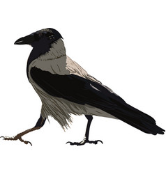 Walking black crow vector