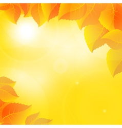 Autumn leaves on a sunny sky background vector