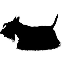 Scotch terrier breed dog vector