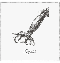Squid hand drawn sketch collection of seafood vector