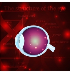 Eye structure red vector image vector image