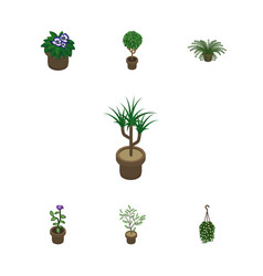 Isometric flower set of tree fern plant and vector